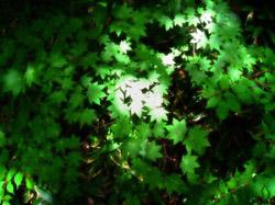 木漏れ日 クール ブルーベース