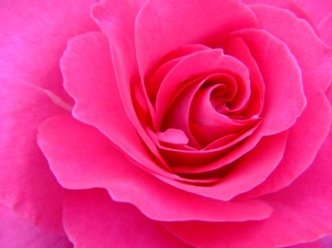 花色カラー ピンク