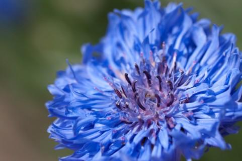 花色ベーシックカラー 青