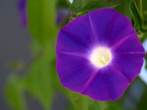 花色ベーシックカラー 青紫