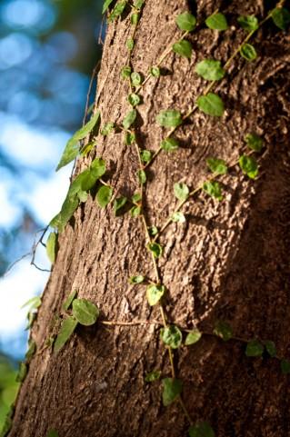 樹木 茶色