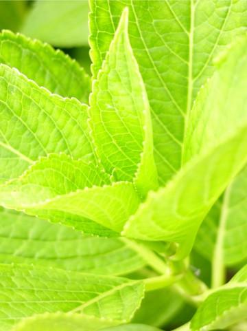 花色ニュートラルカラー 黄緑 葉