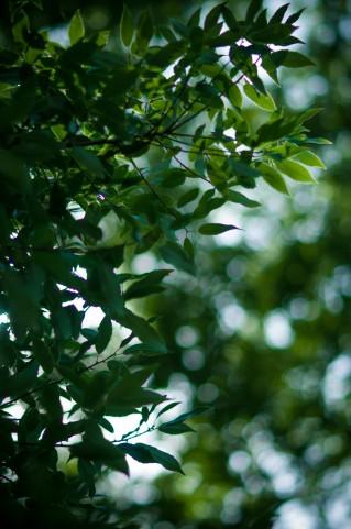 木の葉 青緑