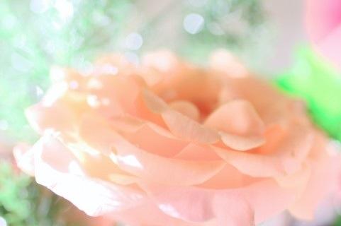 花色バリエーションカラー サーモンピンク