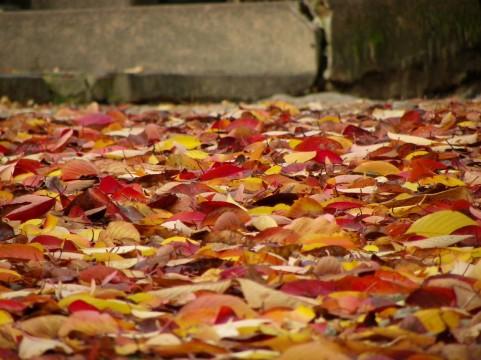 枯葉 朽葉色